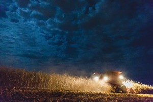 Corn harvest - for website