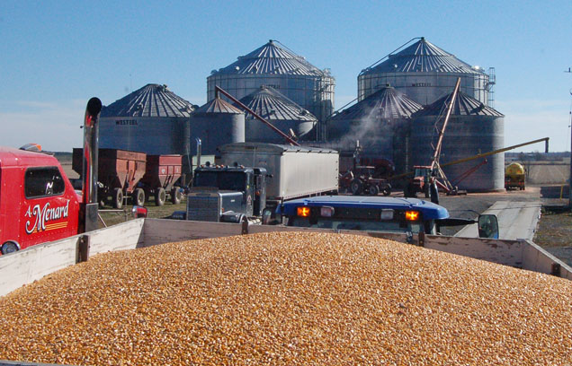 grain at menards