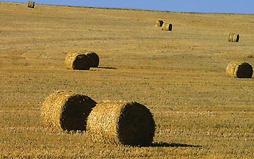 hay field big