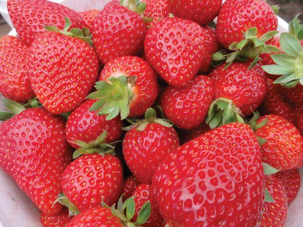 Strawberries2