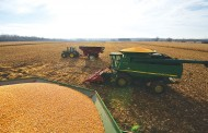 Watch the corn market; it's controlling wheat prices