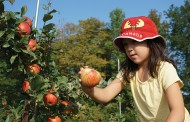 EASTERN ONTARIO: After six hard years, apple crop is looking up