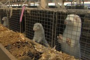 Activist charged with trespassing on mink farm gets his day in court