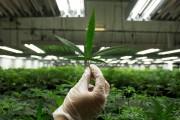 Ontario launches marijuana public awareness campaign as Oct. 17 legalization looms