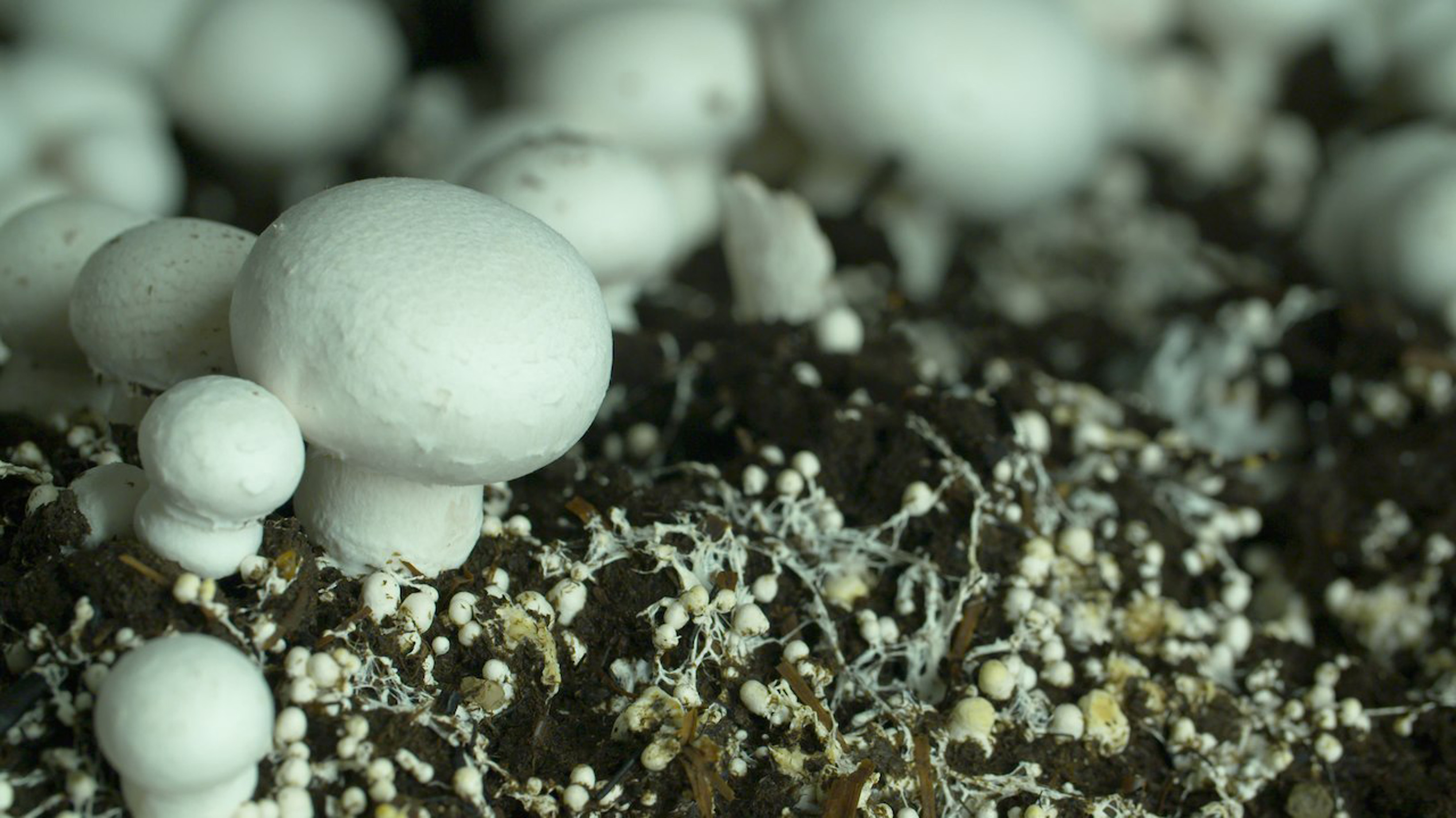 Mushroom-farm worker injured in conveyor accident
