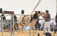 EASTERN ONTARIO: Bonnie Brae Farms disperses herd