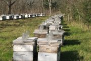 Vandals in Iowa destroy beehives on farm, killing tens of thousands of bees