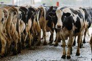 Canada concedes 3.6 per cent domestic milk market, Class 7 milk in trade deal