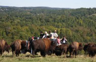 Canadian bison prices rising as markets open up