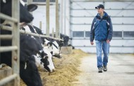 Dairy farmers net farm income increases for first time in six years