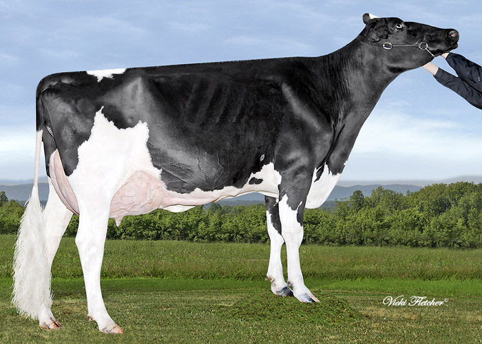 #2012031901 Belfast Goldwyn M Shelley