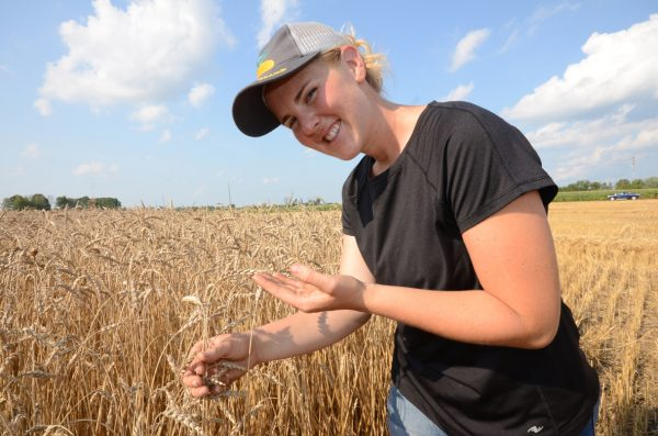 Wheat can be cruel: good yield, niggling grade issues