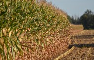 Projected European crop yields drop again as region struggles under drought