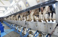 Feds announce compensation for dairy producers from CETA market loss