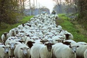 Ontario Sheep Farmers' website hosts online price and profitability tool