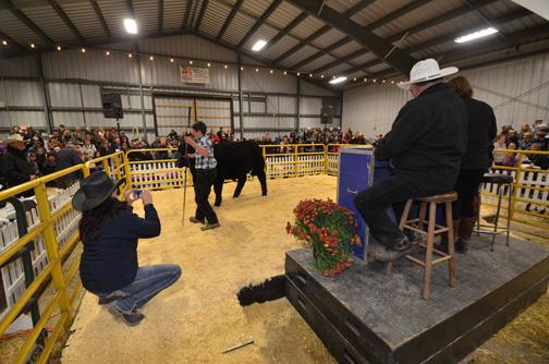 steer Metcalfe Fair 2015