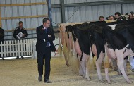 Ferme Blondin dominates Holstein Summer Show at Lindsay