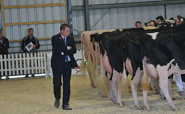 Holstein judging (Nov2015)