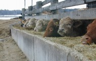 Researcher: Many animal neglect cases on farms likely linked to farmer's mental health