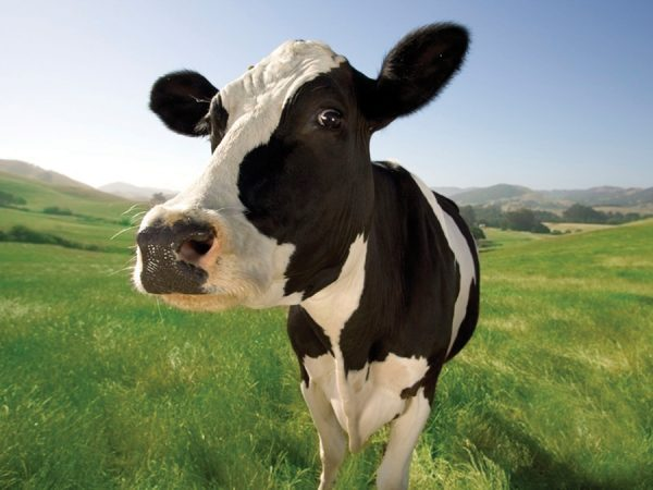 Case study: Good cleaning means goodbye to salmonella in calves