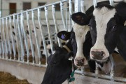 U.S. dairy farmers showing increasing interest in supply management