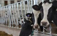 WESTERN ONTARIO: Haag Farms in Huron top-managed Western Ontario herd
