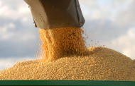 Soybeans moving, albeit slowly, from US to China
