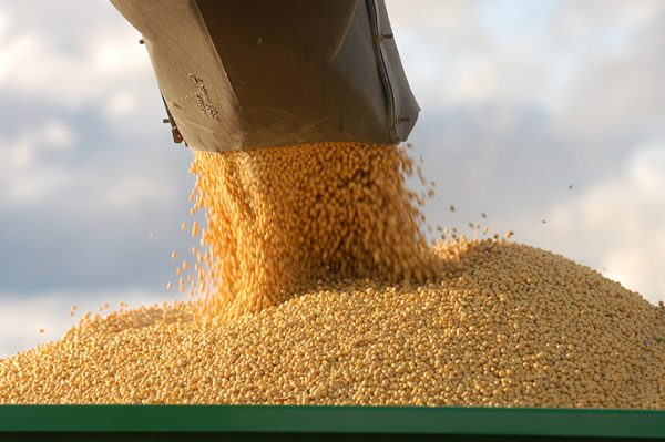 soybean harvest 2015