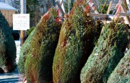 B.C. Christmas tree farmer facing huge tax hike after reassessment pushes land assessment from $14k to $5.4 million