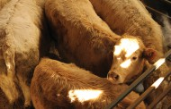 Beef farmers pass 26 resolutions at AGM