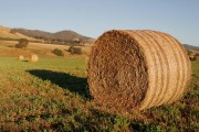 Canada-Saudi foreign relations spat killed Ontario hay exports