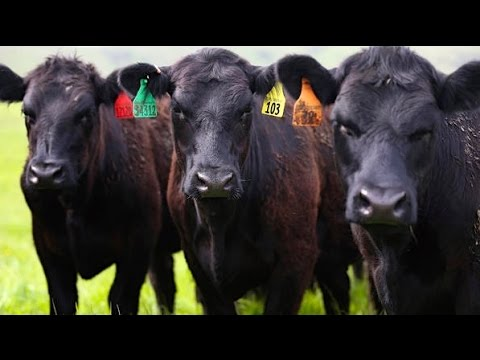 It's safe to eat even more red meat: Study