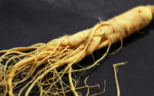 WESTERN ONTARIO: Ginseng price drops as some growers not