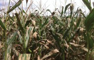Tips to control weeds, pests and improve yields