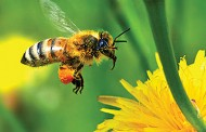 """Neonicotinoid replacement """"may have risks for bees,"""" scientists say"""
