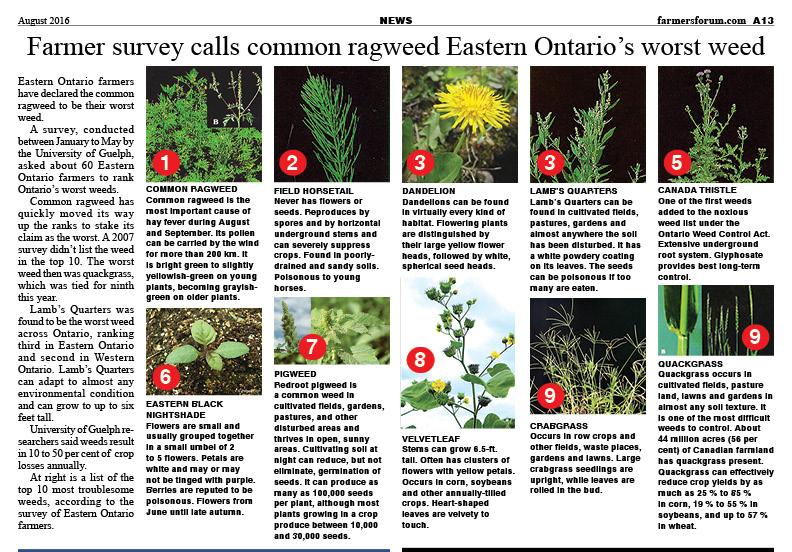 EASTERN ONATRIO WEEDS for Website
