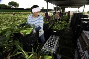 Canada's farm labour shortage to hit 123,000 by 2029: report