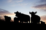 WESTERN ONTARIO: Warwick Township asks province for stronger farm protections