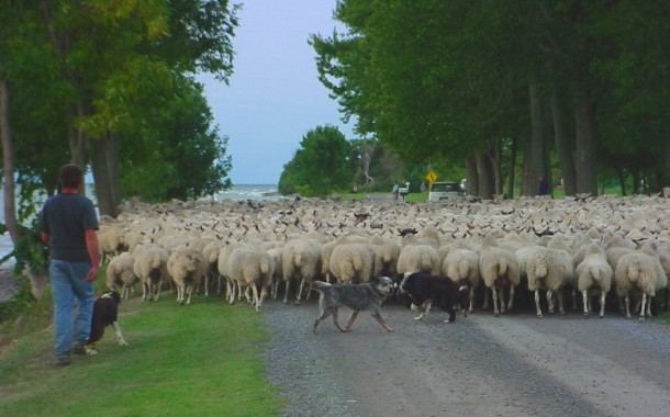 EASTERN ONTARIO: Sheep farm at risk due to wind turbine construction