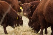 "Alberta reserve to receive $150 million for claim the federal government ""devastated"" their cattle industry"