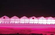 Tomato greenhouse can't afford to turn on new LED lights because of hydro costs