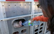 U.S. ag gag law busted by judge