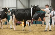 The myth about cow flatulence