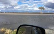 EASTERN ONTARIO: Winter wheat struggled through snow, wet winter