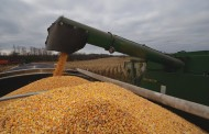 EASTERN ONTARIO: Corn harvest ho-hum, with lots still in the field