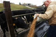 Dairy and beef cattle farmers worry that new food guide will hurt business