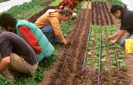 P.E.I ag fed wants seasonal farm workers to be able to bank hours