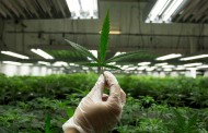 Find out how much your town is getting to help with cannabis legalization