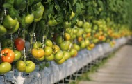 Feds pump nearly $4M into four horticultural research projects
