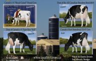 Quality Holsteins  dominate Spring Discovery Show five years running